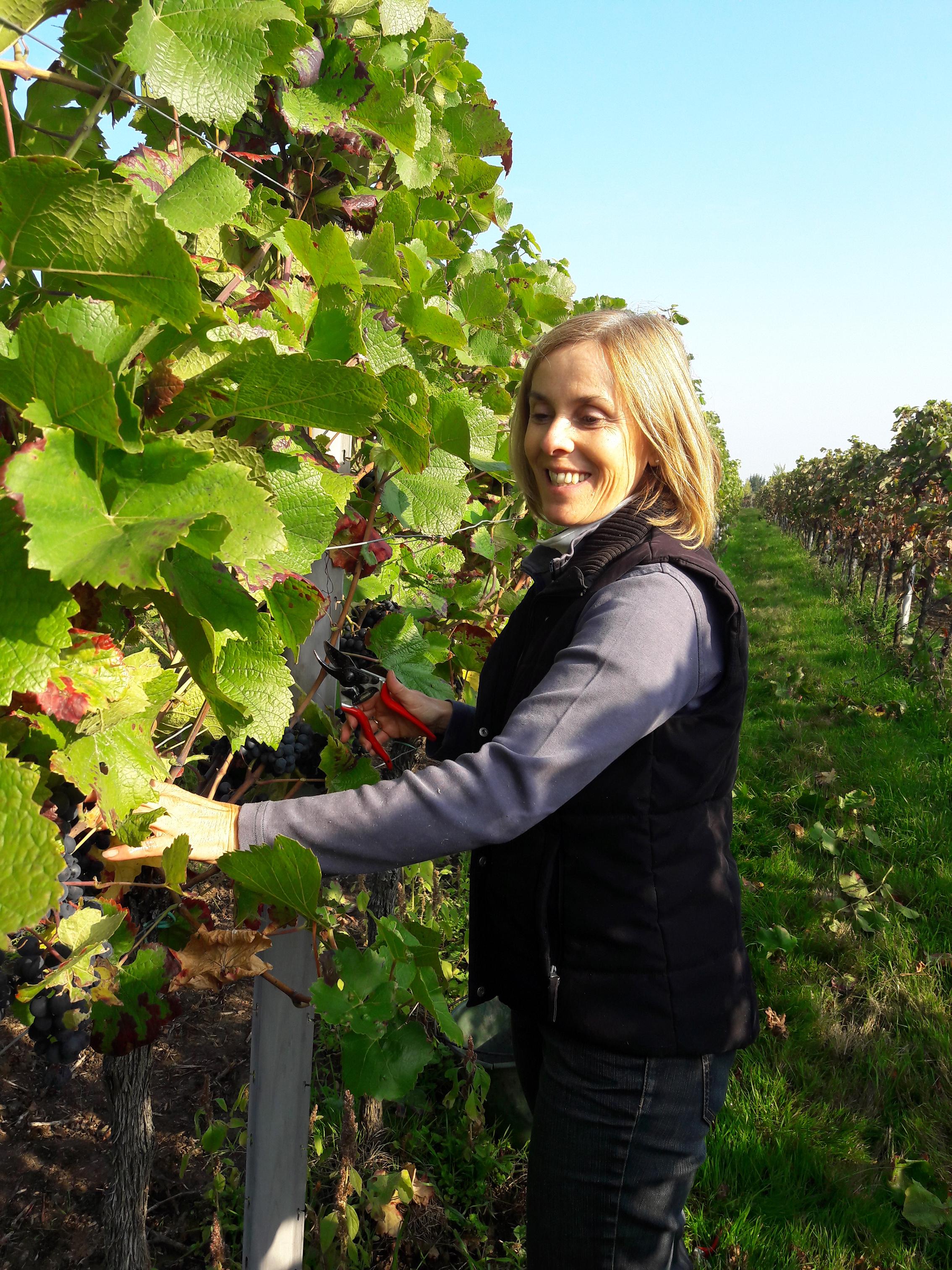 Monika im Weinbau